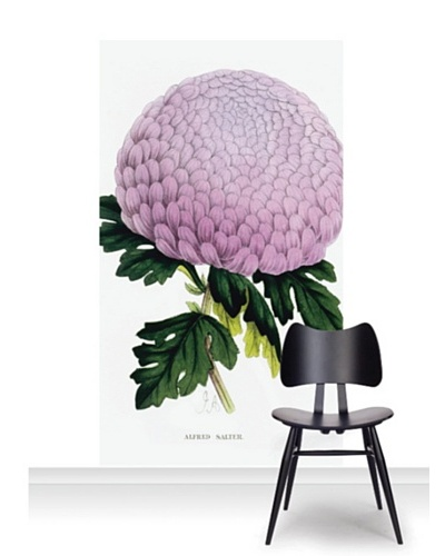 Royal Horticultural Society Chrysanthemum Cultivar Mural [Accent]