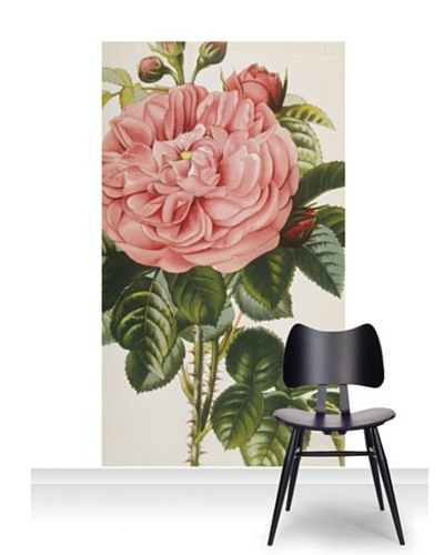 Royal Horticultural Society Rosa Baronne Prevost Mural [Accent]
