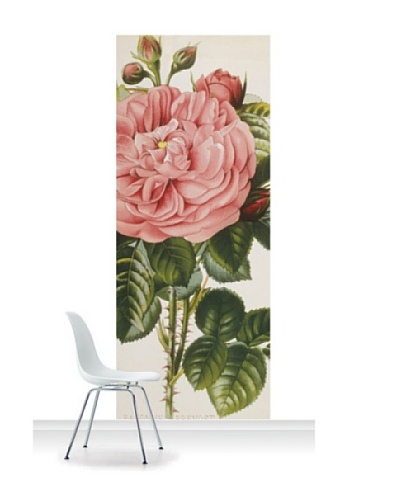 Royal Horticultural Society Rosa 'Baronne Prevost'' Standard Mural [Accent]