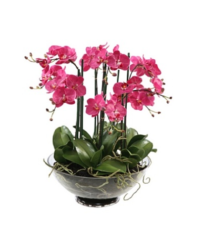 Winward Faux Phalaenopsis in Glass, Fuchsia
