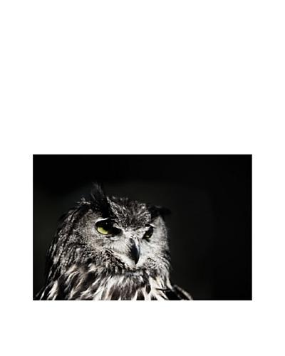 Art Addiction Owl