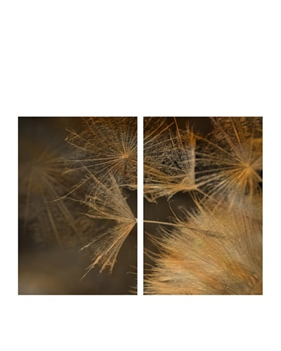Art Addiction Set of 2 Extreme Dandelion II 36 x 24 Acrylic Panels