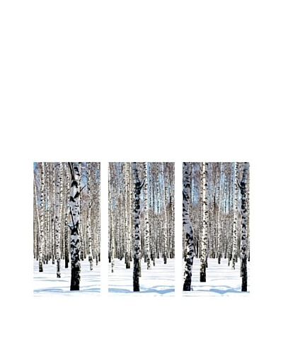 Art Addiction Snowy Birch, Triptych