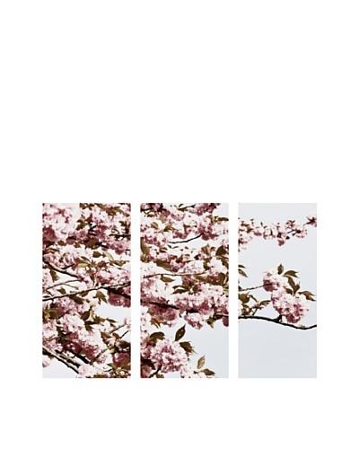 Art Addiction Cherry Blossom, Triptych
