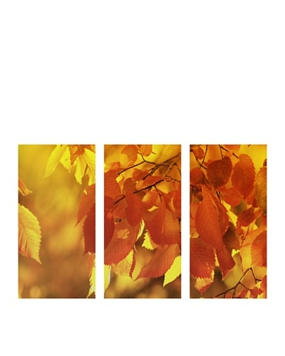 "Art Addiction Set of 3 Autumn Foliage I 36"" x 18"" Acrylic Panels"