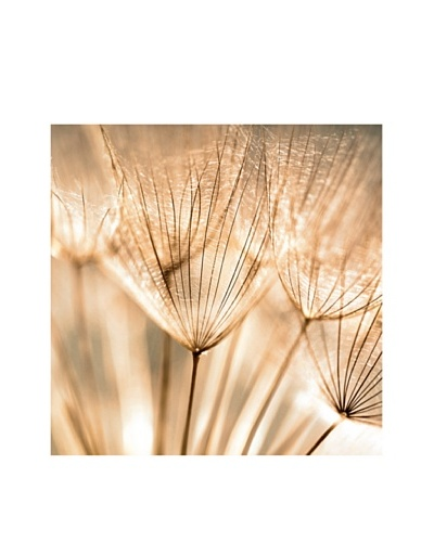 Art Addiction Dandelion Seed I