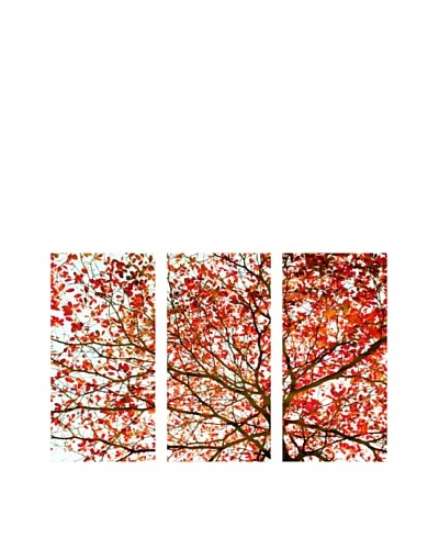 "Art Addiction Set of 3 Autumn Foliage II 36"" x 18"" Acrylic Panels"