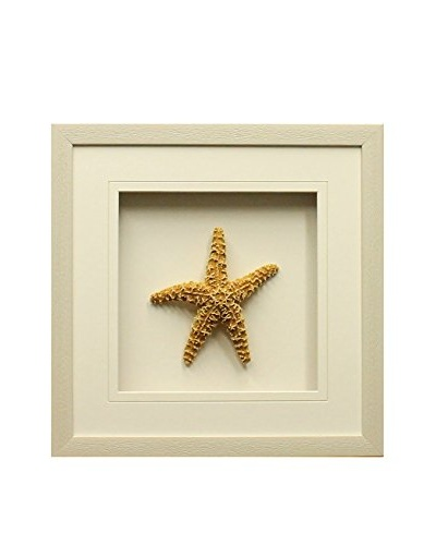 Star Creations Sugar Starfish Shadowbox