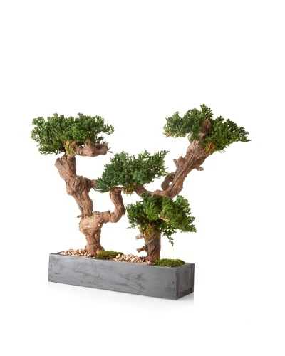 Forever Green Art Bonsai Hedge