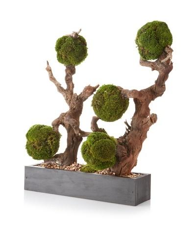 Forever Green Art Moss Ball Hedge