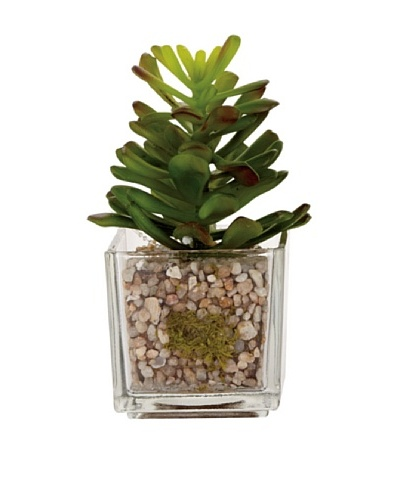 Torre & Tagus Glass Potted Echeveria, Agave