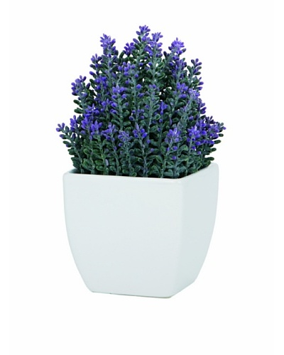 Torre & Tagus Tapered Ceramic Potted Faux Lavender, White, Small