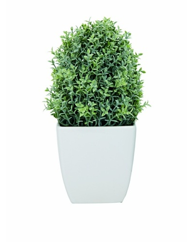 Torre & Tagus Tapered Ceramic Potted Faux Thyme, White, Large