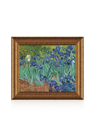 Vincent van Gogh Irises In The Garden Framed Canvas