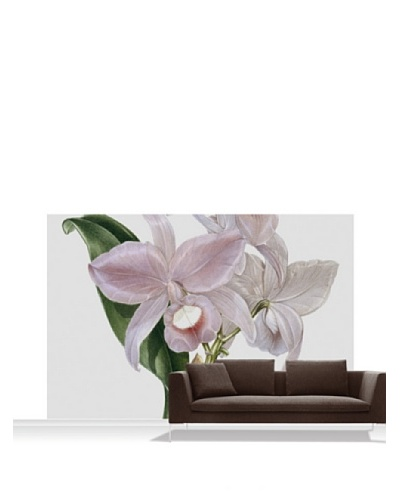 Victoria and Albert Museum Orchid - Cattelya Skinerii Standard Mural - 12' x 8'
