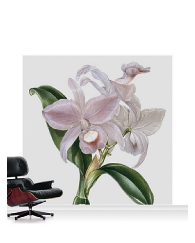 Victoria and Albert Museum Orchid - Cattelya Skinerii Standard Mural - 8' x 8'