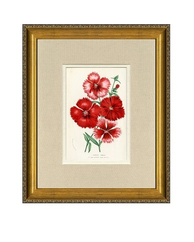 Vintage Print Gallery Antique Hand-Finished Dianthus Print, Circa 1850's
