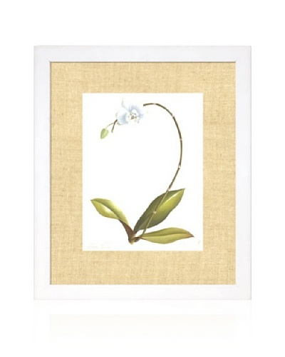 Orchid II, White/Bamboo