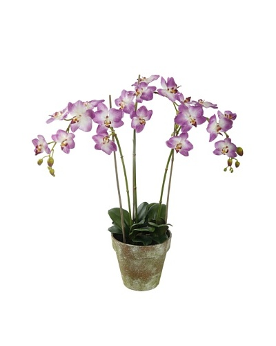 Winward Faux Phalaenopsis Orchid Bunch in Terracotta Pot, Pink