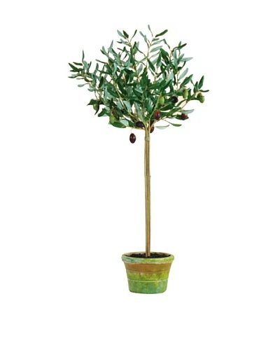 Potted Olive Leaf, Burgundy/Green