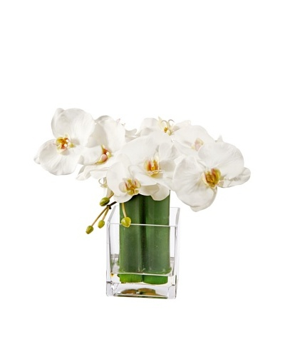 Winward Phalaenopsis & Bamboo in Glass