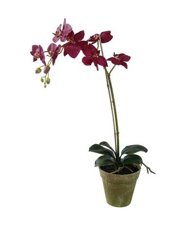 Winward Faux Phalaenopsis Orchid in Terracotta Pot, Fuschia