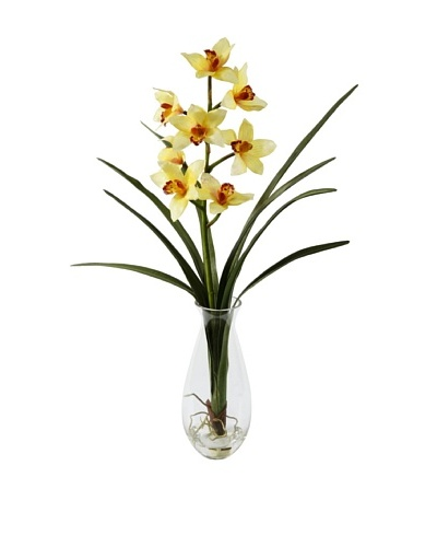 Winward Cymbidium Orchid in Vase, Yellow