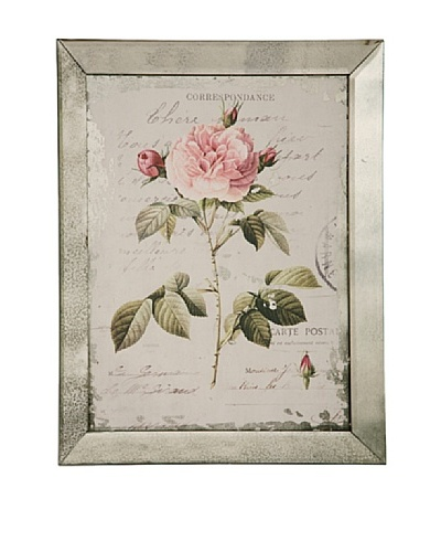Winward English Rose III Framed Print