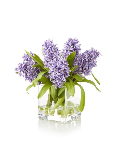 Hyacinth in Square Glass, Purple