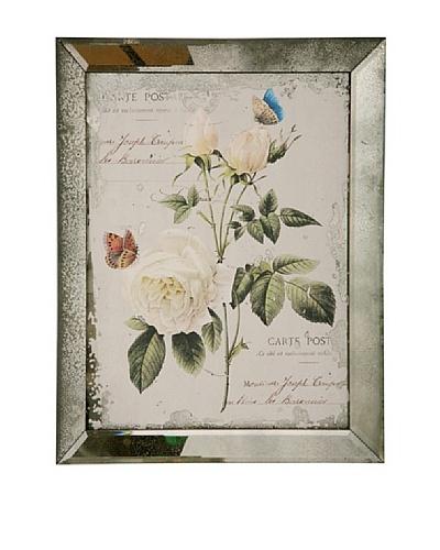 Winward English Rose II Framed Print
