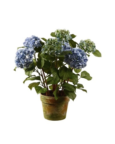 Winward Hydrangea in Pot, Light Blue