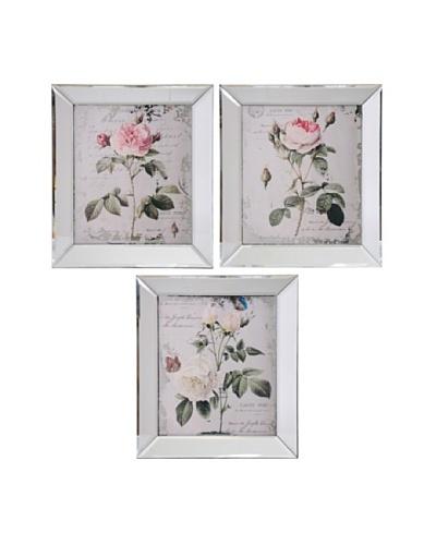 Winward Set of 3 Assorted Framed Botanical Rose Prints