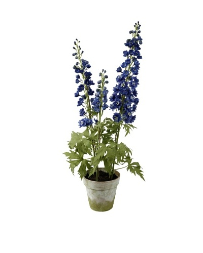 Winward Delpinium Potted, Blue