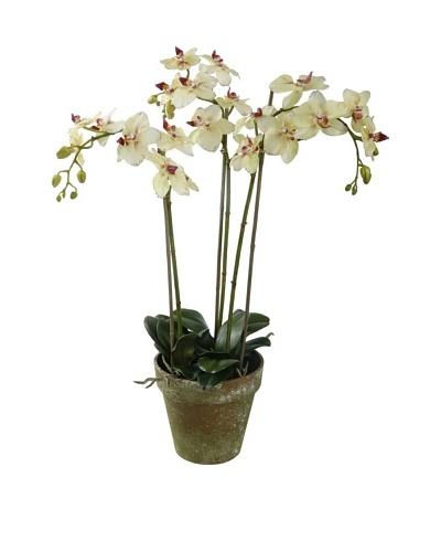 Winward Faux Phalaenopsis Orchid Bunch in Terracotta Pot, Yellow