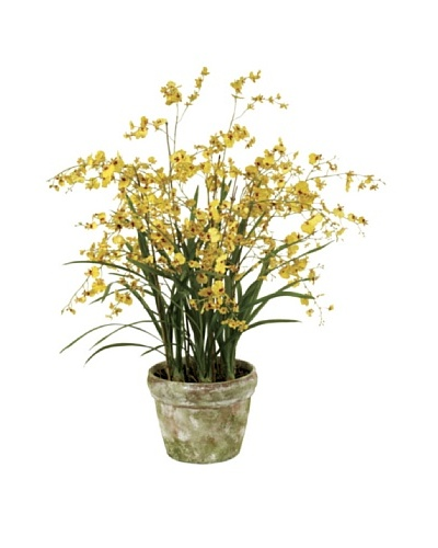 Winward Pot Dancing Oncidium Orchid, Yellow