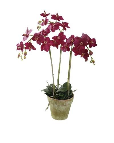 Winward Faux Phalaenopsis Orchid Bunch in Terracotta Pot, Fuschia