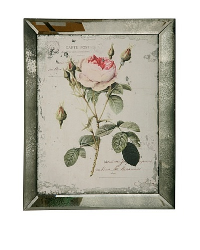 Winward English Rose I Framed Print
