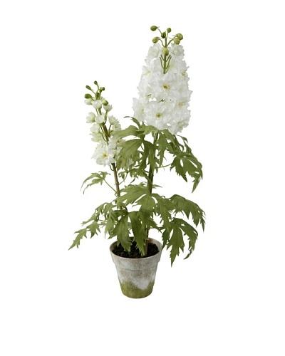 Winward Delphinium Potted Plant, Heavenly White